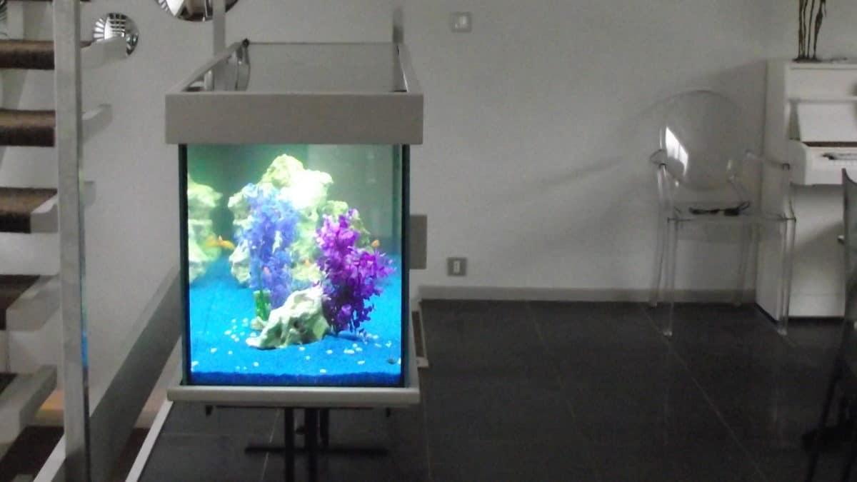Aquarium ambiance électrique et design, à Nantes