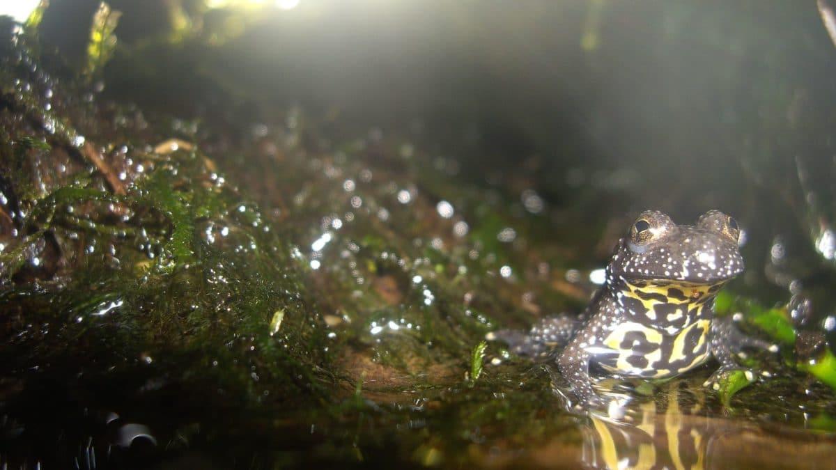 grenouille de face dans un paludarium