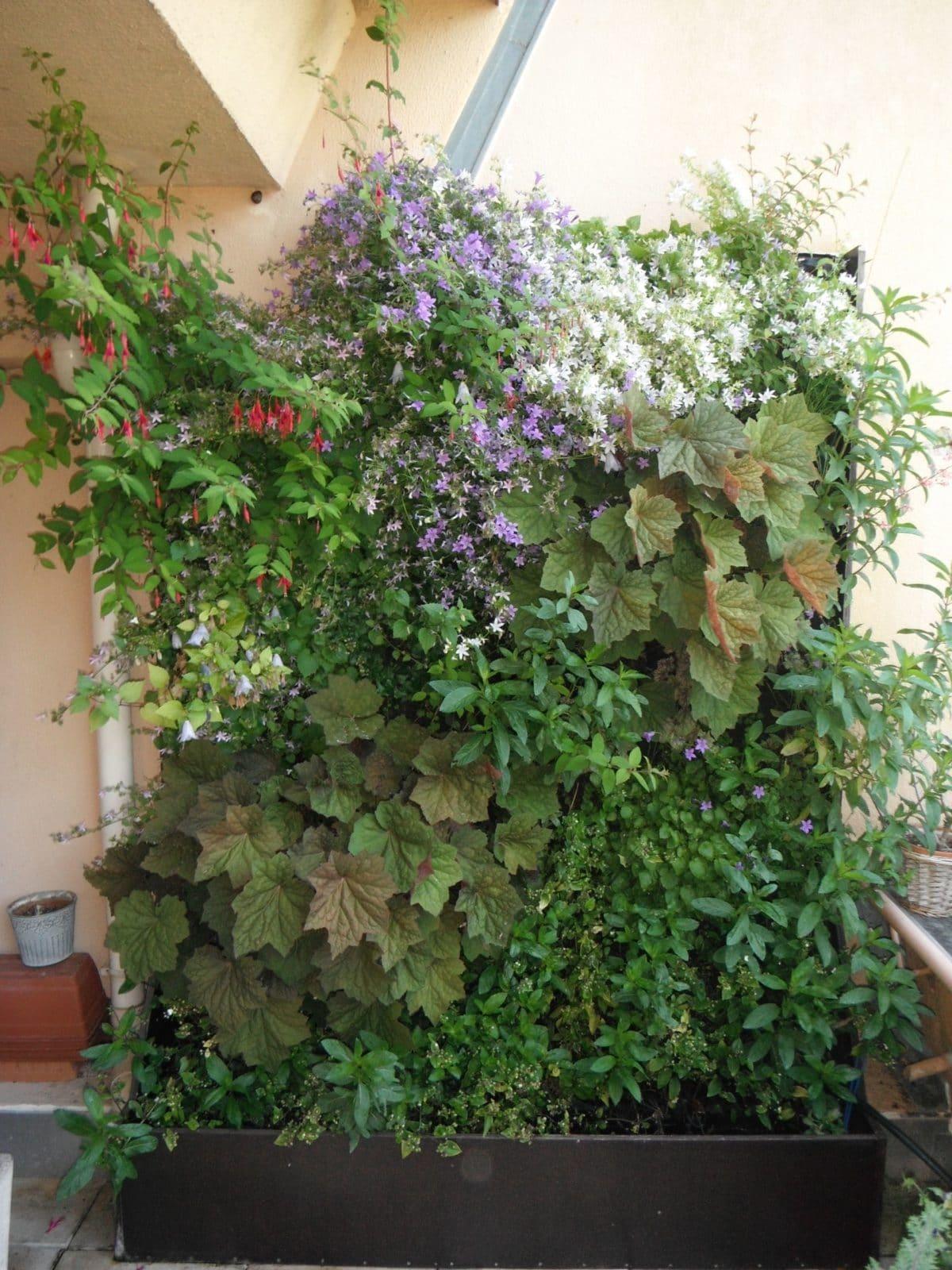Jardin vertical sur un balcon à Nantes