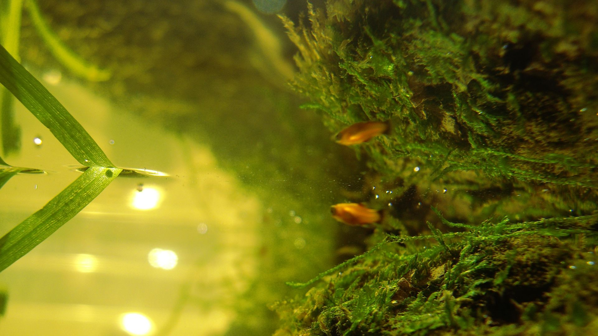 poisson aquarium eau douce