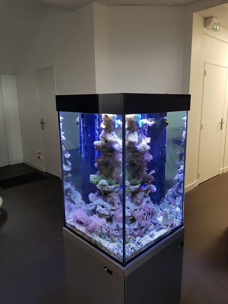 Aquarium récifal sur-mesure, 350L dans un cabinet comptable à Angers