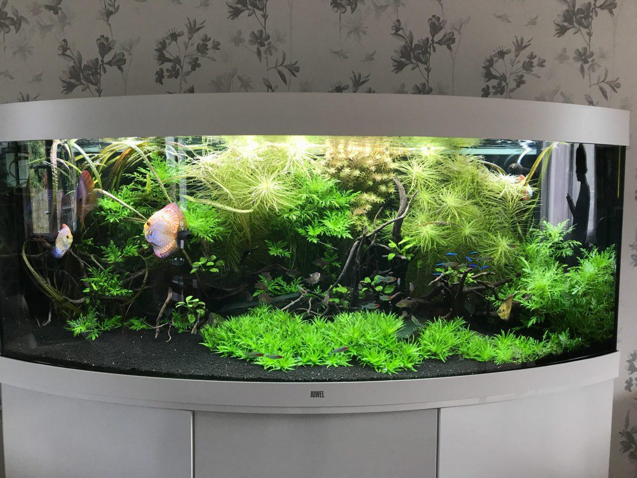 Aquarium de Discus, 450L chez un particulier à Ste Luce sur Loire